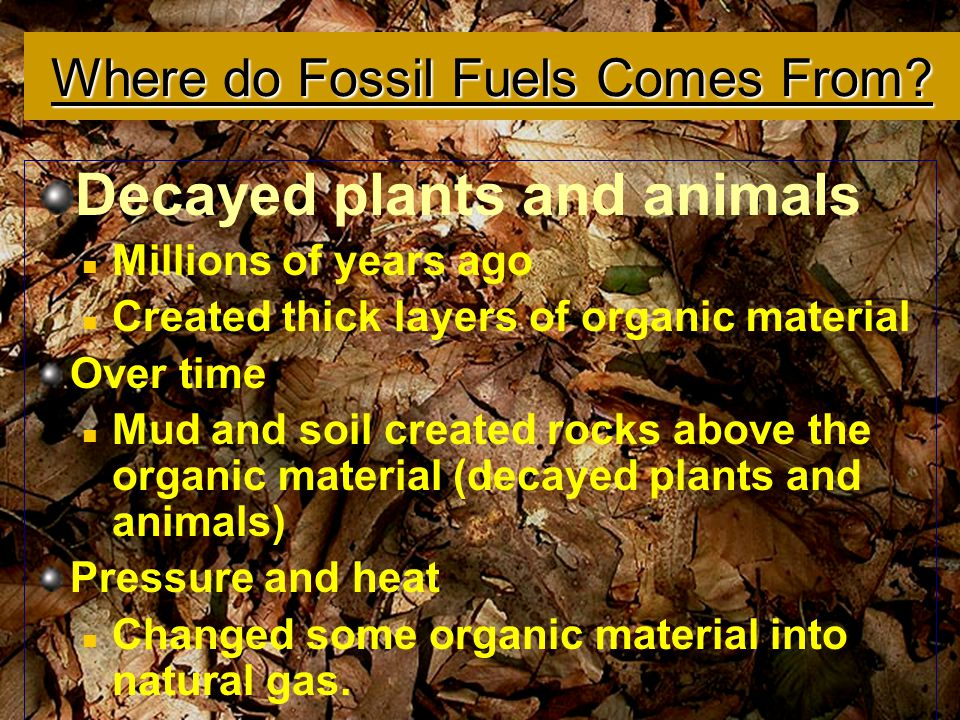 Where do Fossil Fuels Comes From
