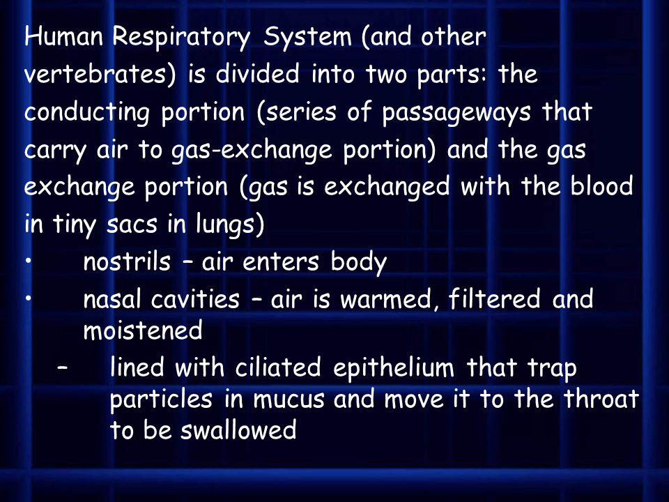Human Respiratory System (and other