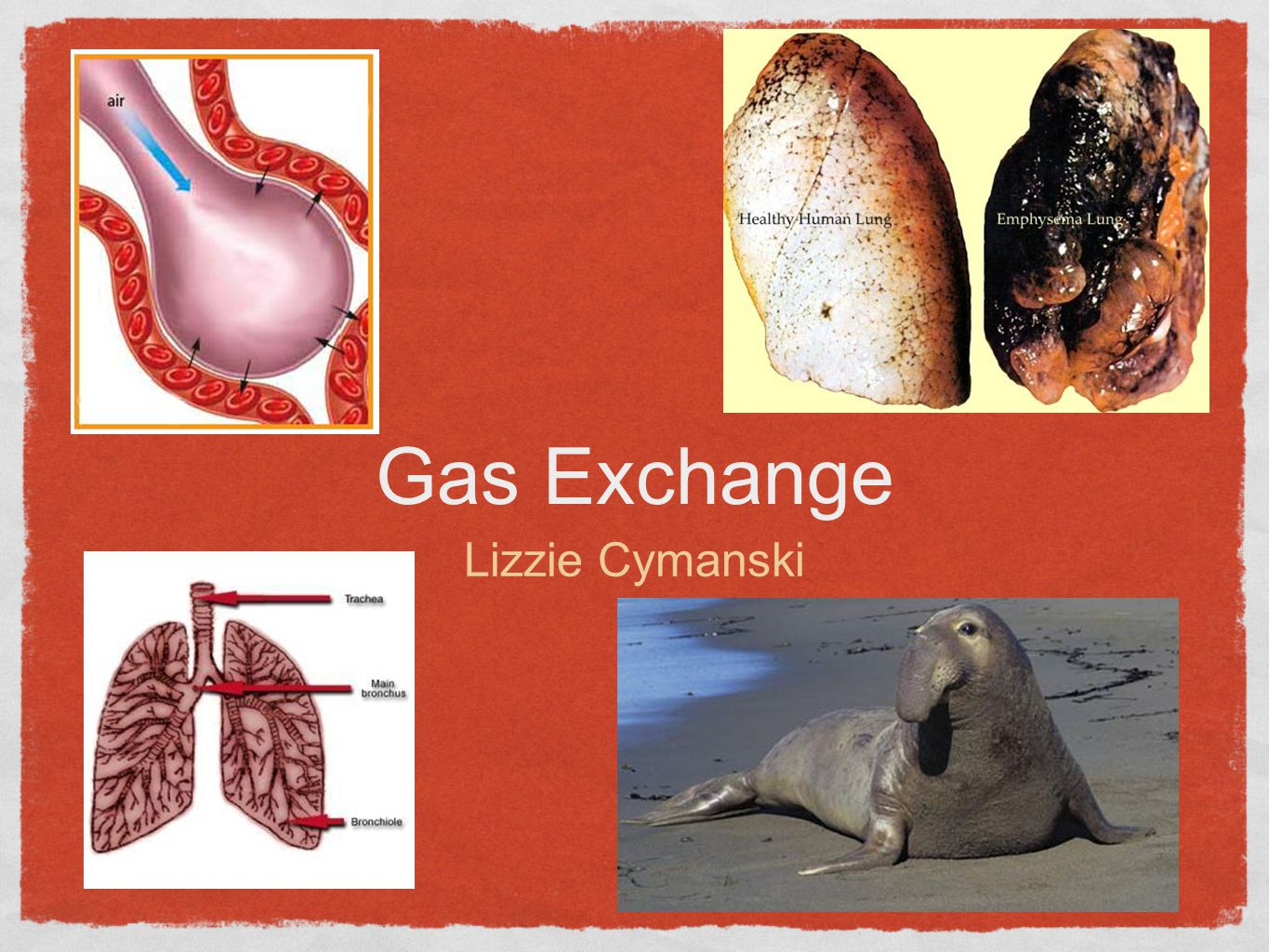 Gas Exchange Lizzie Cymanski
