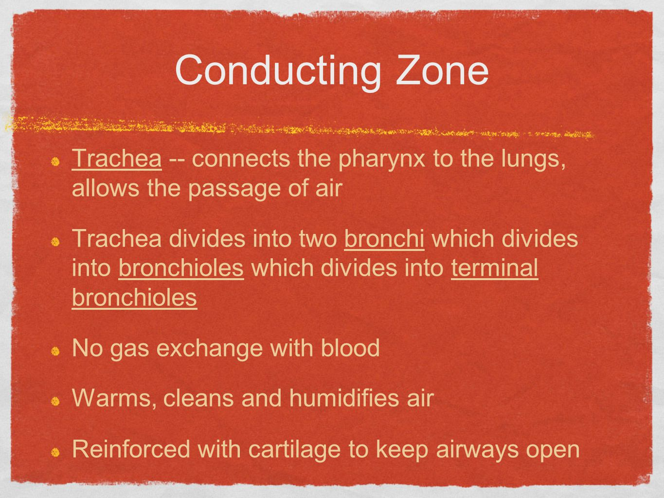 Conducting Zone Trachea -- connects the pharynx to the lungs, allows the passage of air.