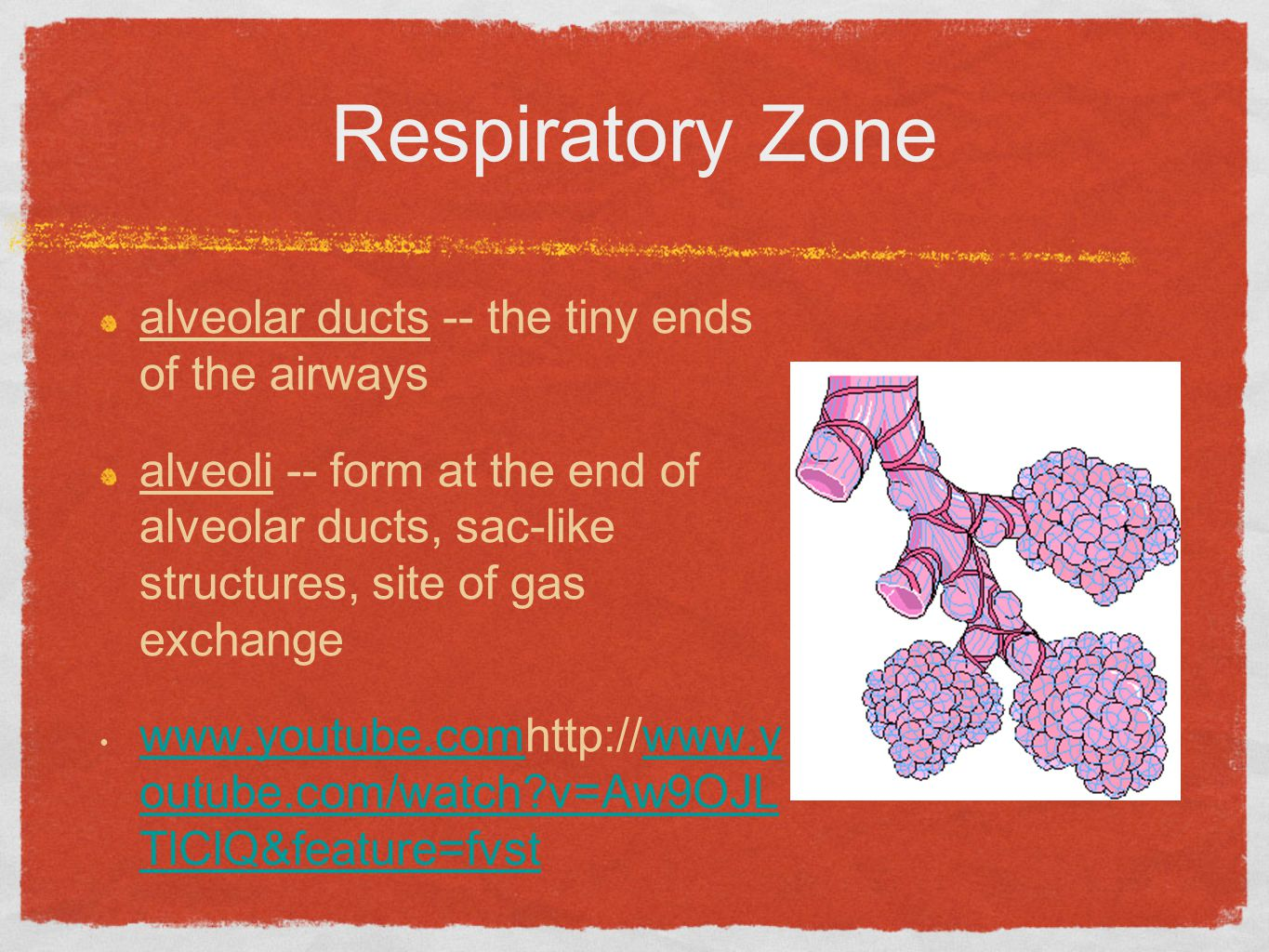 Respiratory Zone alveolar ducts -- the tiny ends of the airways