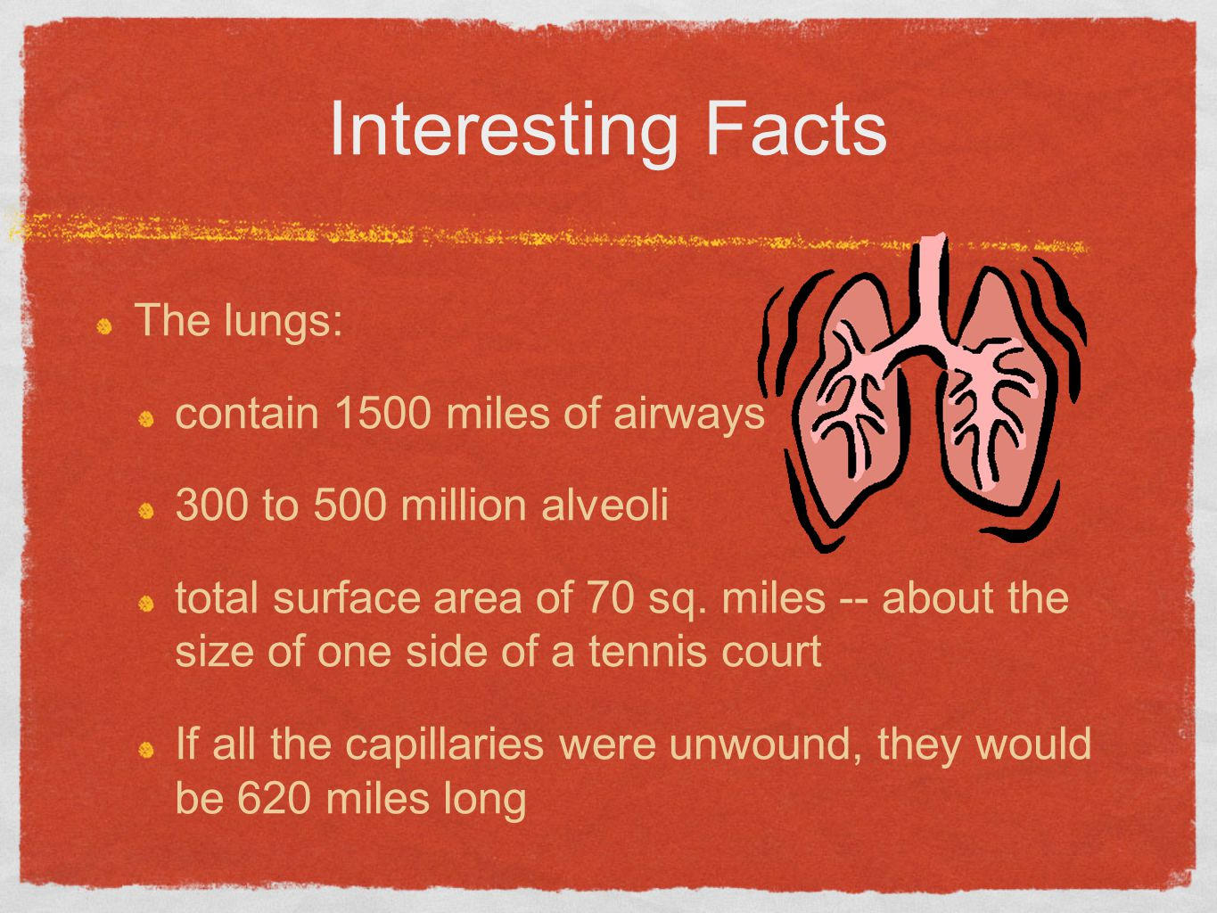 Interesting Facts The lungs: contain 1500 miles of airways
