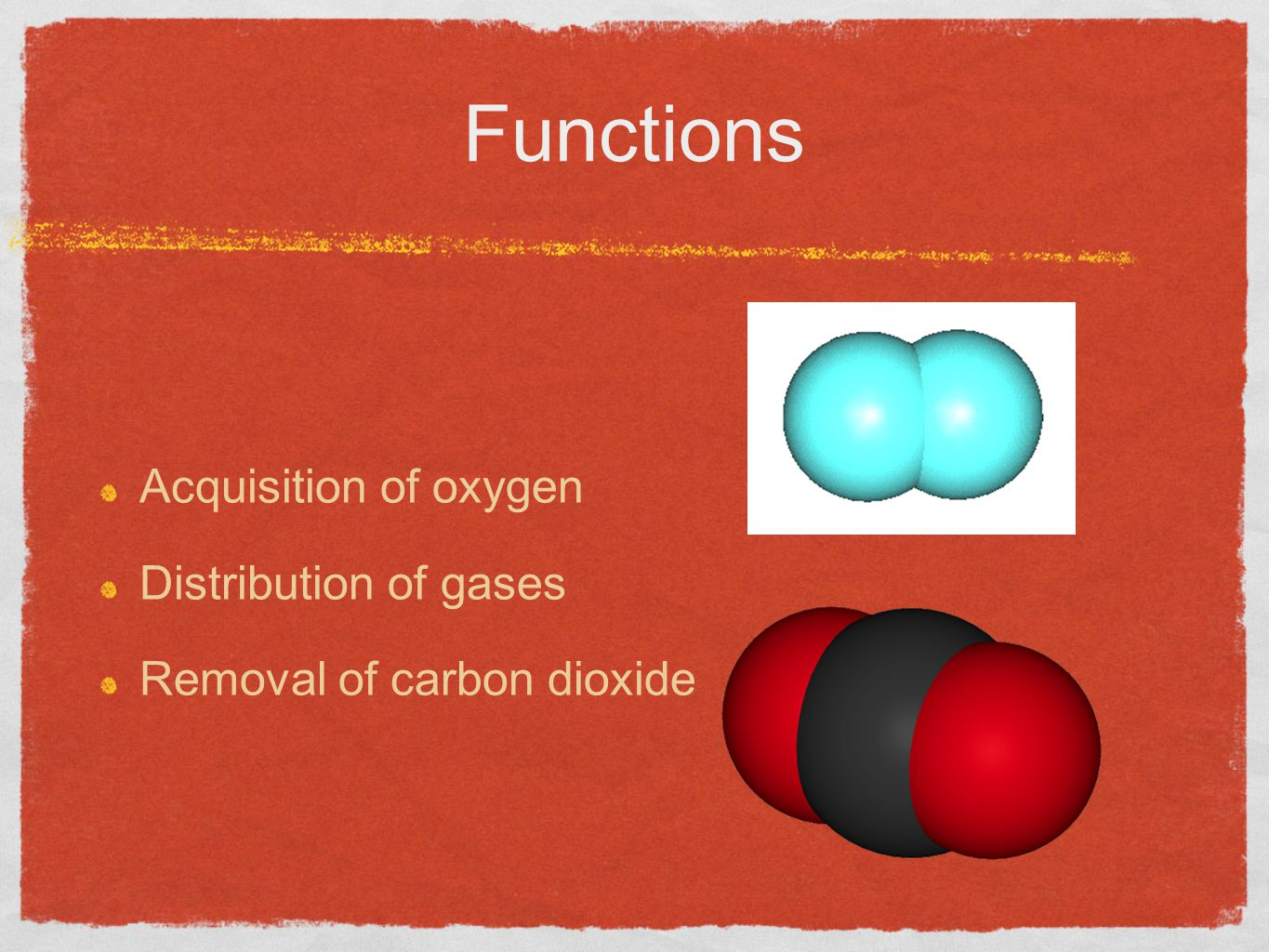 Functions Acquisition of oxygen Distribution of gases