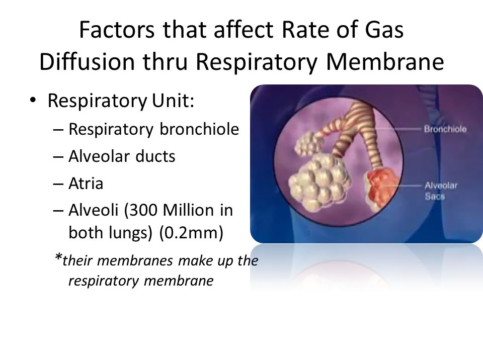 Factors that affect Rate of Gas Diffusion thru Respiratory Membrane