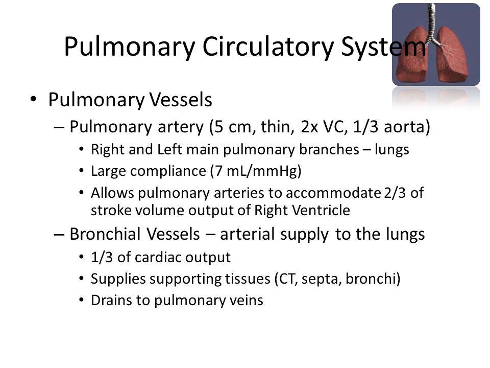 Pulmonary Circulatory System