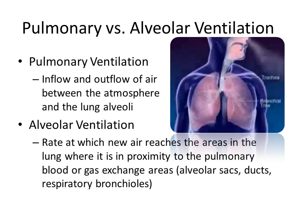 Pulmonary vs. Alveolar Ventilation