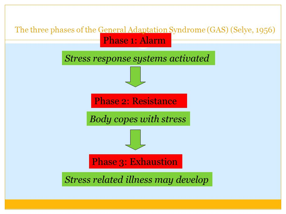 Stress response systems activated