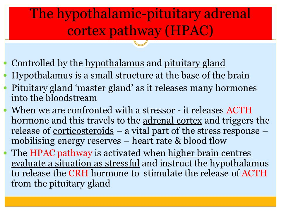 The hypothalamic-pituitary adrenal cortex pathway (HPAC)