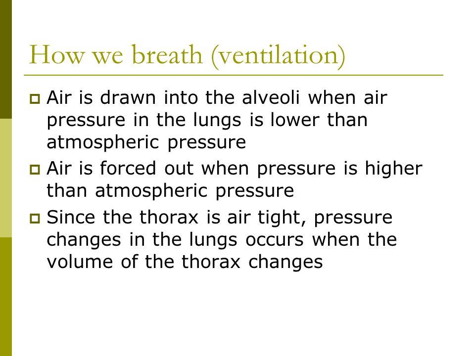 How we breath (ventilation)