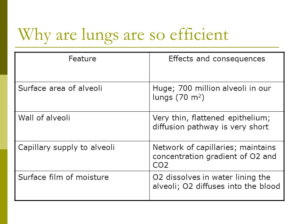 Why are lungs are so efficient