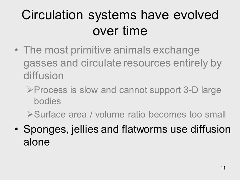 Circulation systems have evolved over time