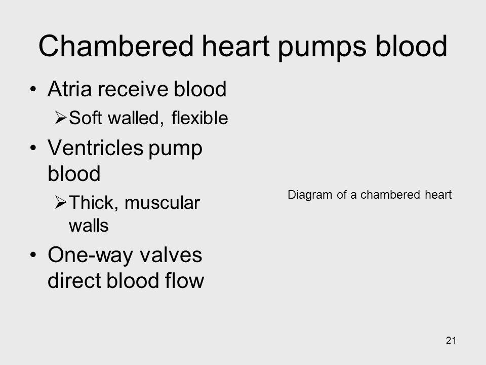 Chambered heart pumps blood