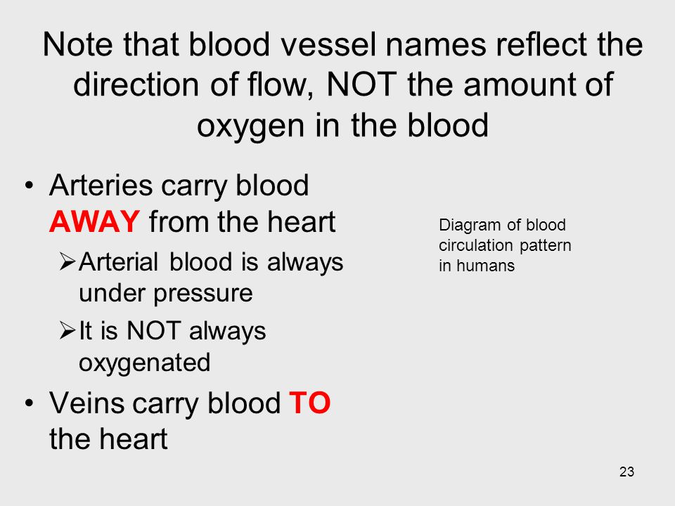 Note that blood vessel names reflect the direction of flow, NOT the amount of oxygen in the blood