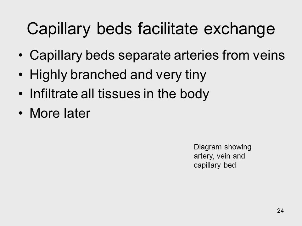 Capillary beds facilitate exchange