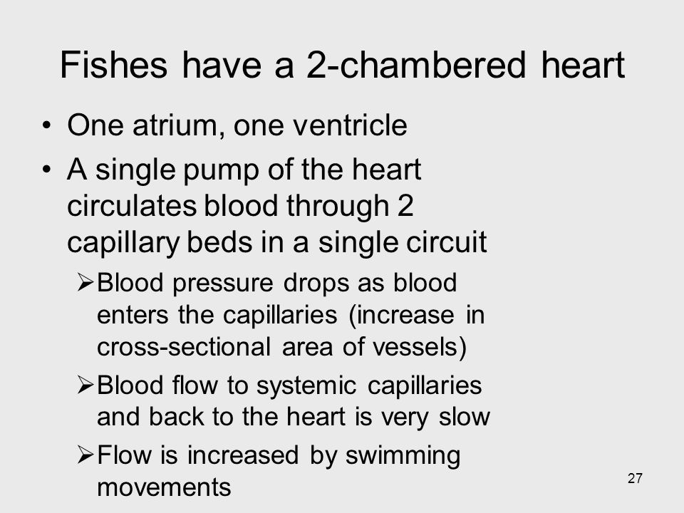 Fishes have a 2-chambered heart