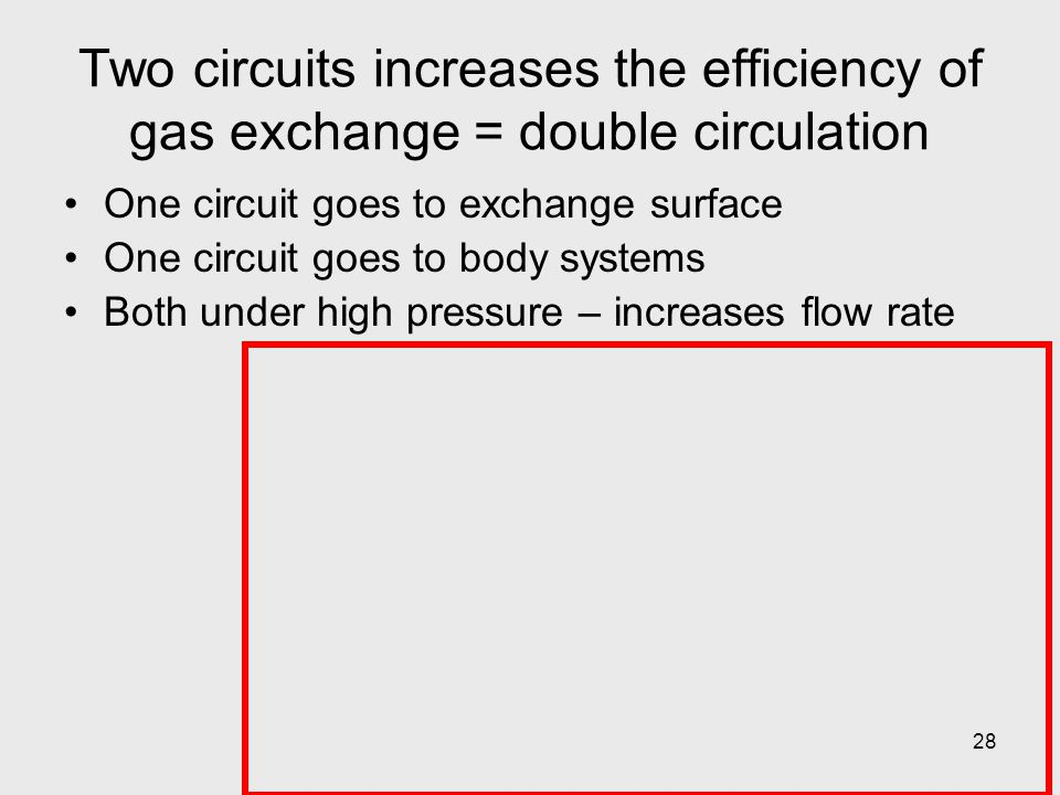 Two circuits increases the efficiency of gas exchange = double circulation