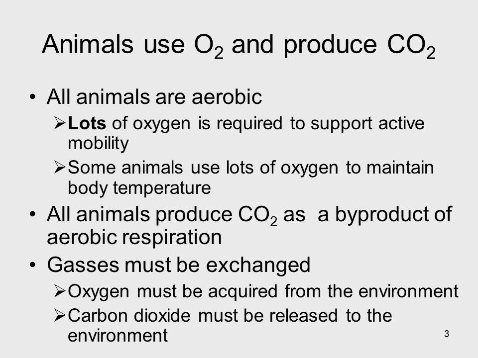Animals use O2 and produce CO2