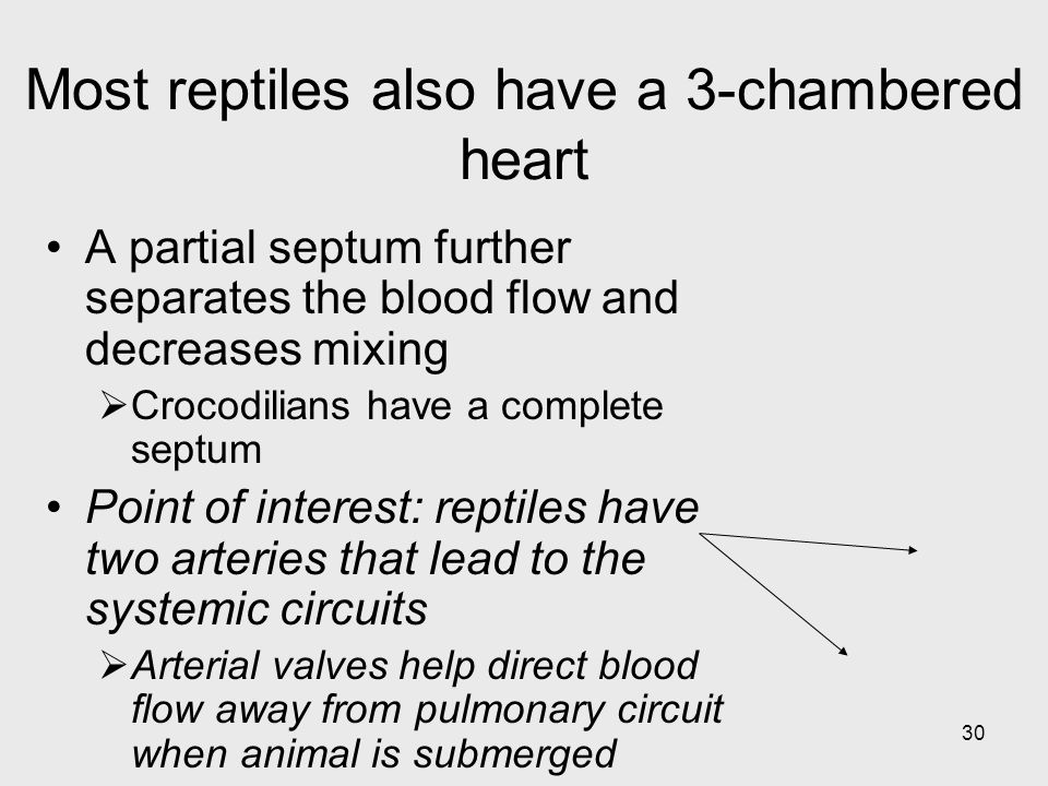 Most reptiles also have a 3-chambered heart