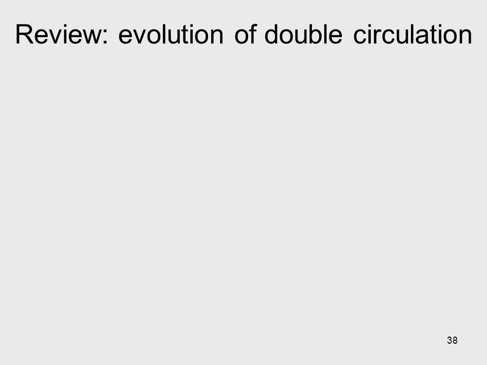 Review: evolution of double circulation