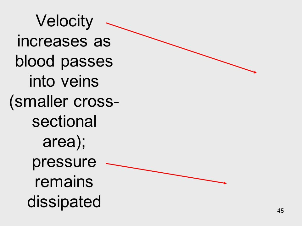 Velocity increases as blood passes into veins (smaller cross-sectional area); pressure remains dissipated