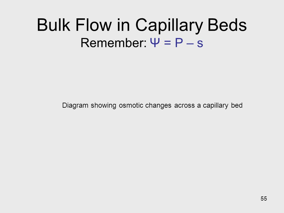 Bulk Flow in Capillary Beds Remember: Ψ = P – s