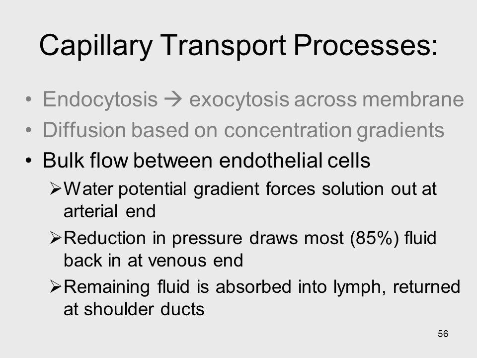Capillary Transport Processes: