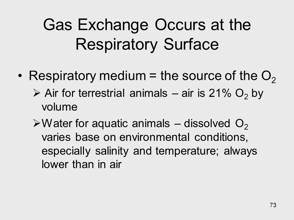 Gas Exchange Occurs at the Respiratory Surface