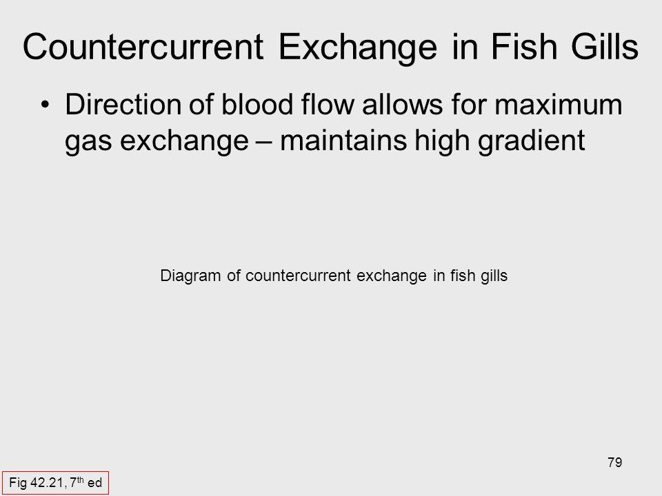 Countercurrent Exchange in Fish Gills