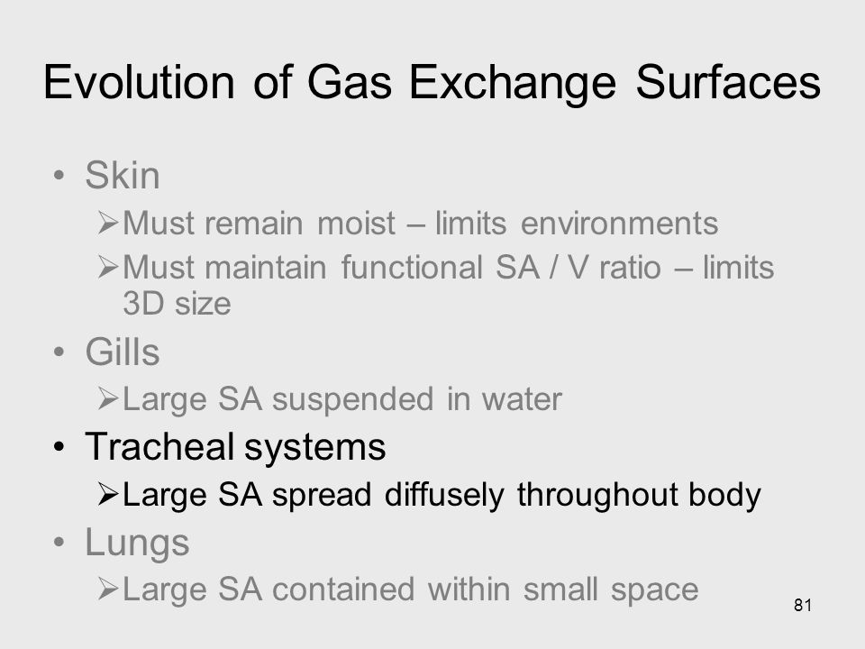 Evolution of Gas Exchange Surfaces