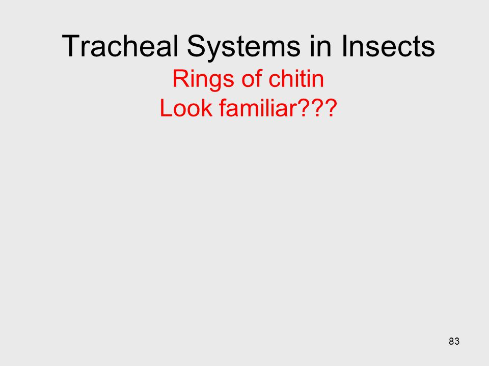 Tracheal Systems in Insects Rings of chitin Look familiar