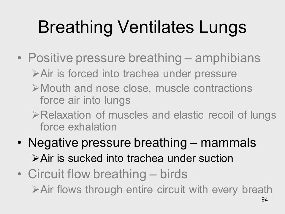 Breathing Ventilates Lungs