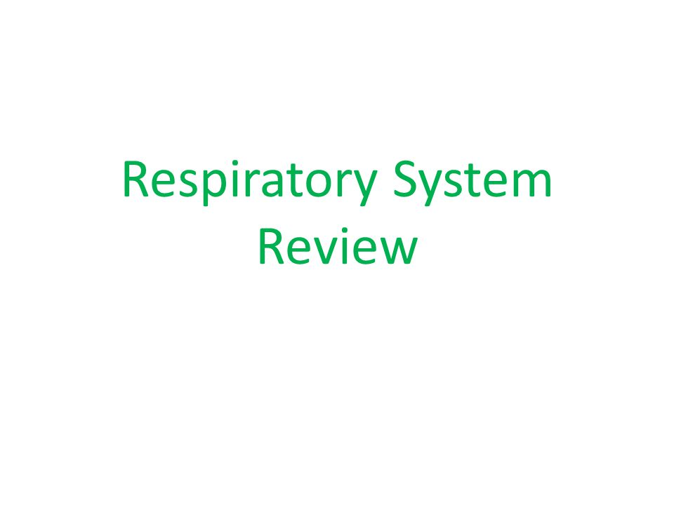 Respiratory System Review