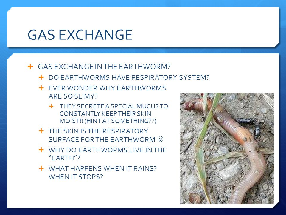 GAS EXCHANGE GAS EXCHANGE IN THE EARTHWORM