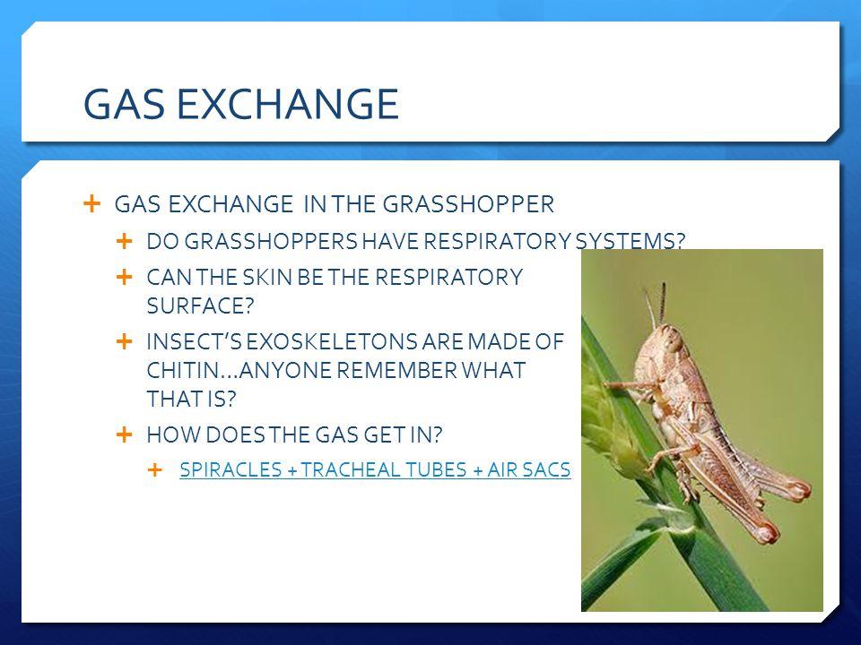 GAS EXCHANGE GAS EXCHANGE IN THE GRASSHOPPER