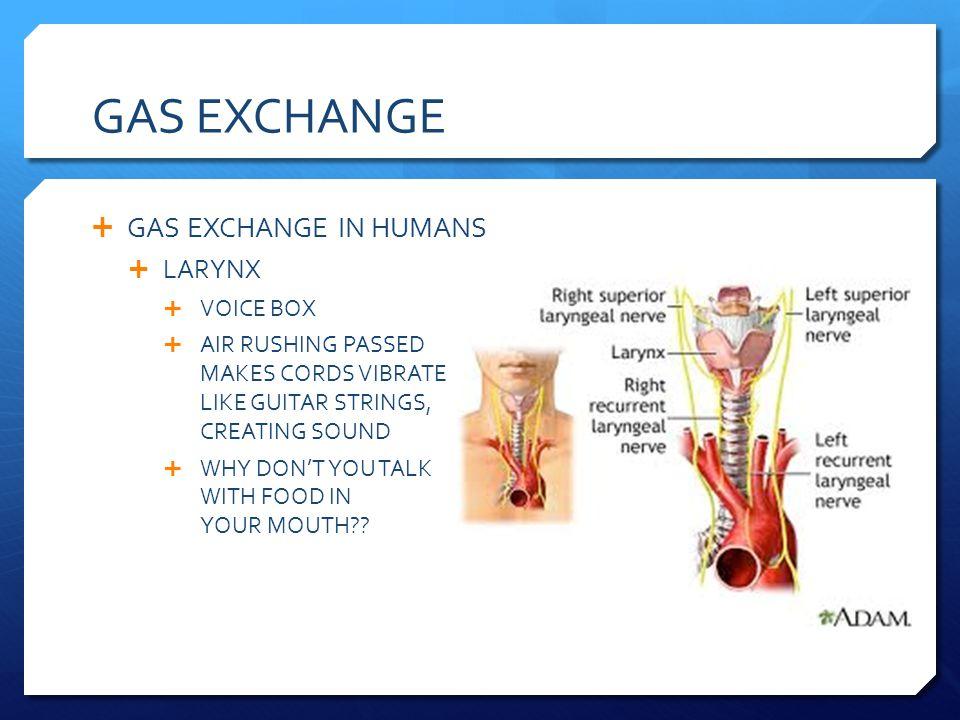 GAS EXCHANGE GAS EXCHANGE IN HUMANS LARYNX VOICE BOX