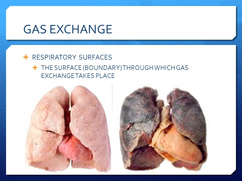 GAS EXCHANGE RESPIRATORY SURFACES