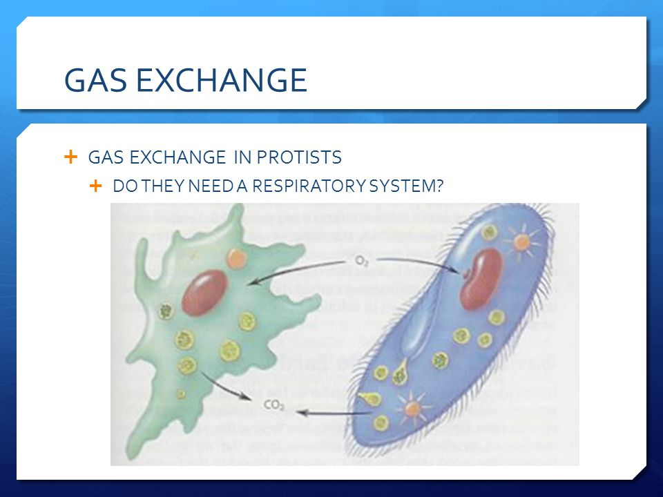 GAS EXCHANGE GAS EXCHANGE IN PROTISTS