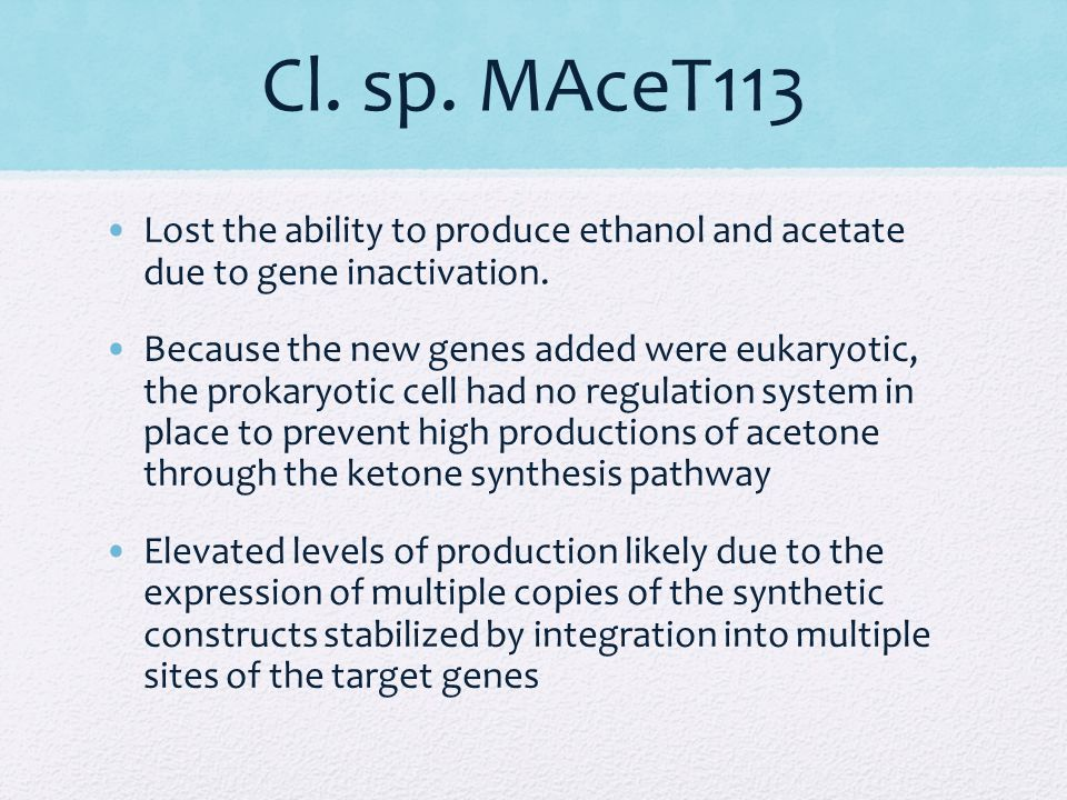 Cl. sp. MAceT113 Lost the ability to produce ethanol and acetate due to gene inactivation.