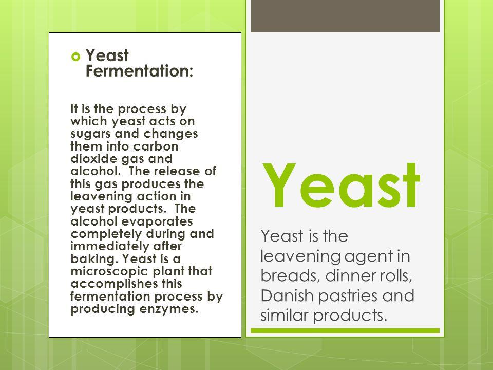 Yeast Yeast Fermentation: