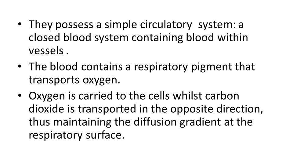 They possess a simple circulatory system: a closed blood system containing blood within vessels .
