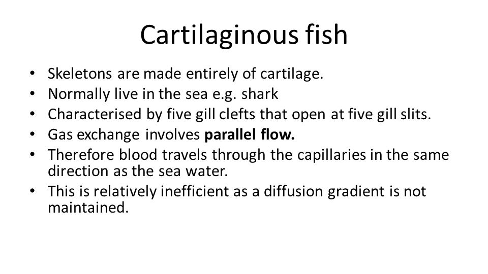 Cartilaginous fish Skeletons are made entirely of cartilage.