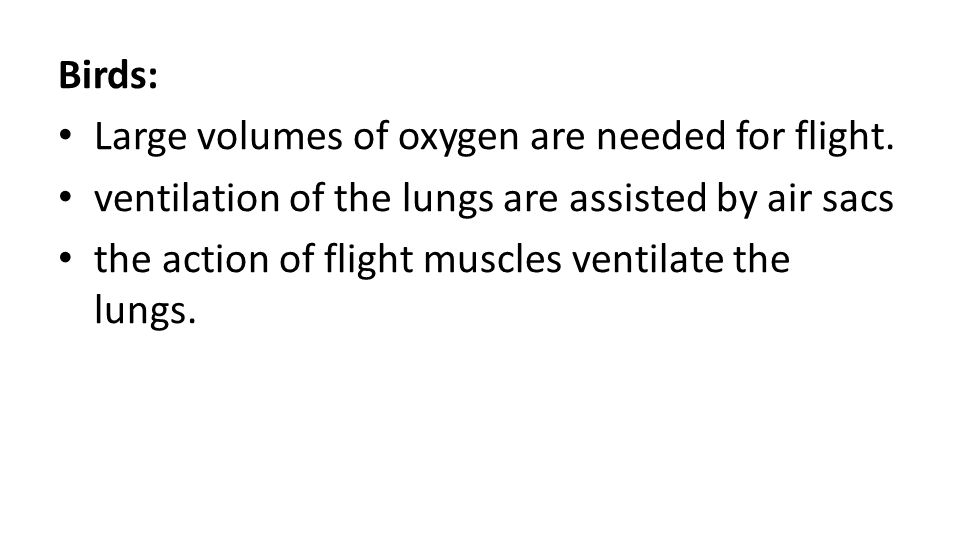 Birds: Large volumes of oxygen are needed for flight. ventilation of the lungs are assisted by air sacs.