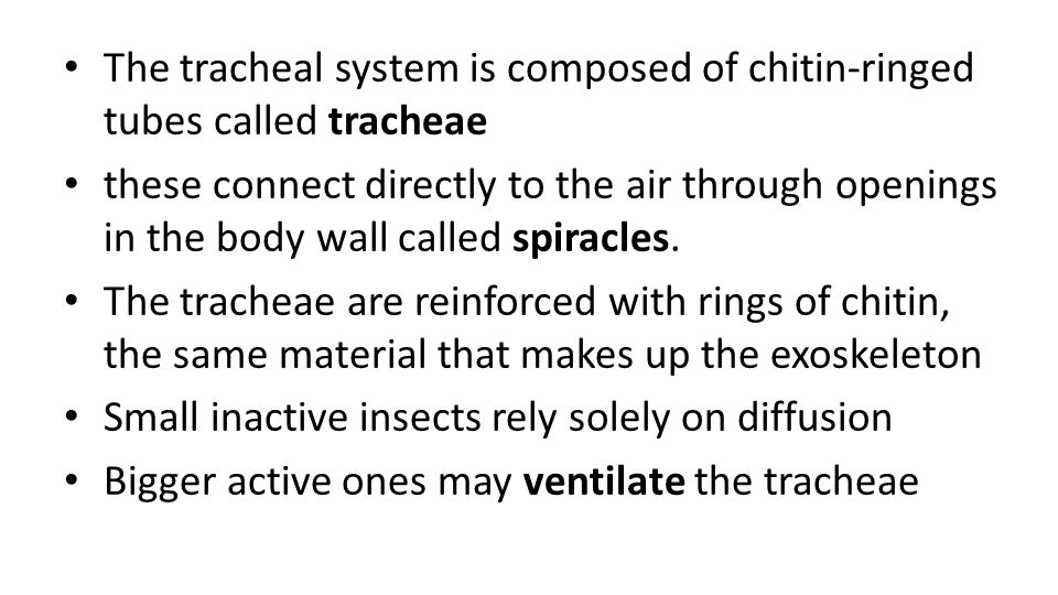 The tracheal system is composed of chitin-ringed tubes called tracheae