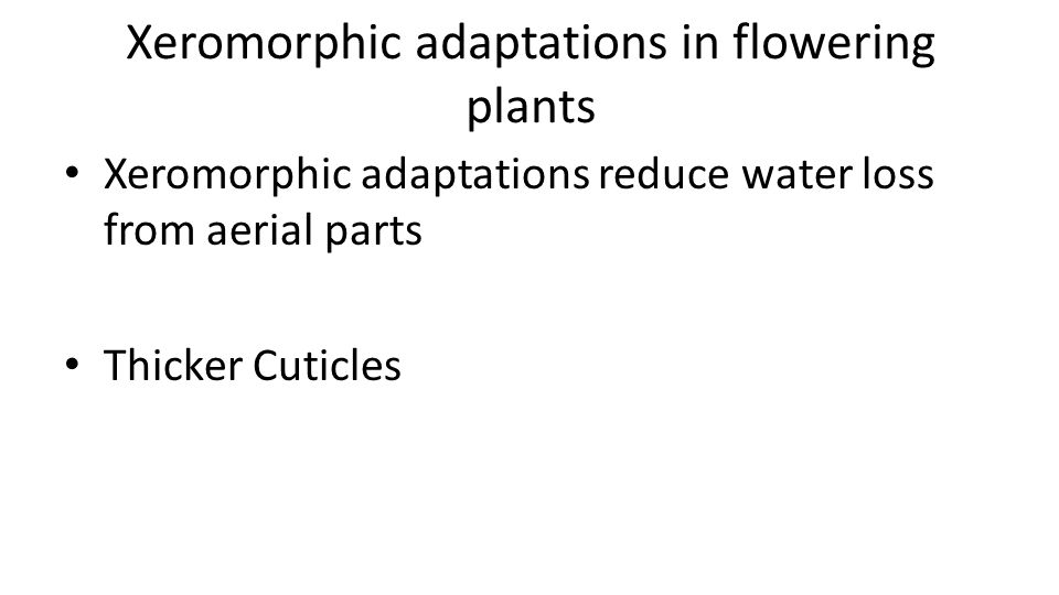 Xeromorphic adaptations in flowering plants