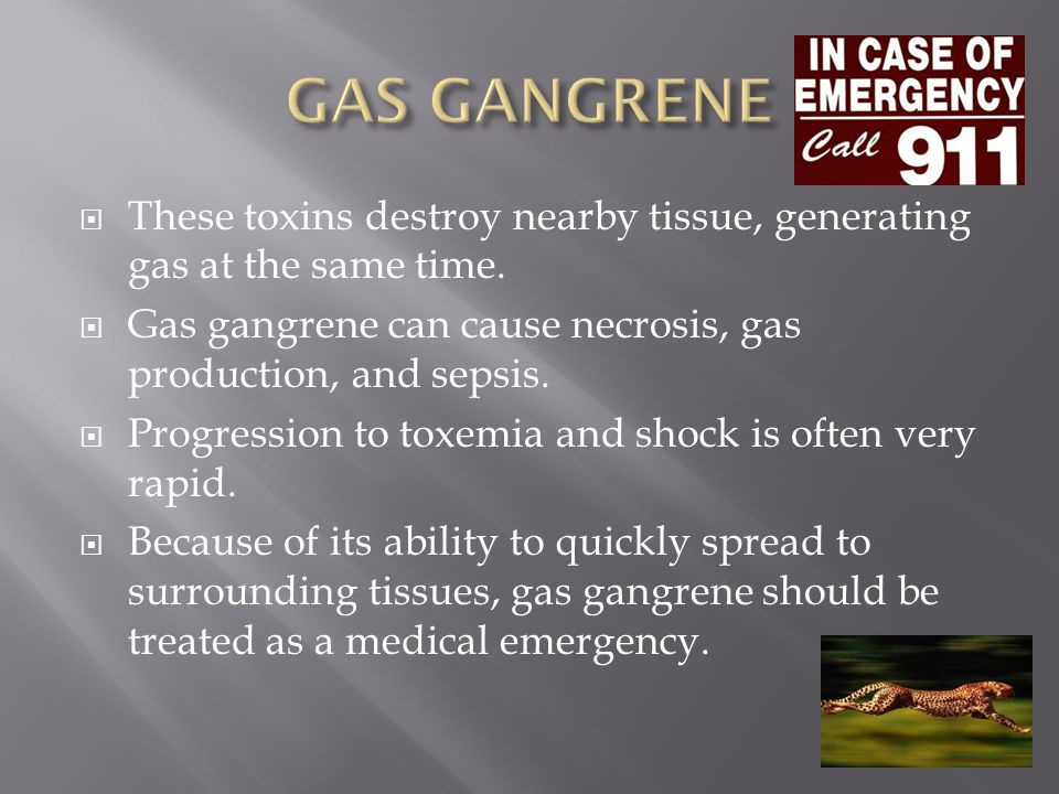 GAS GANGRENE These toxins destroy nearby tissue, generating gas at the same time. Gas gangrene can cause necrosis, gas production, and sepsis.