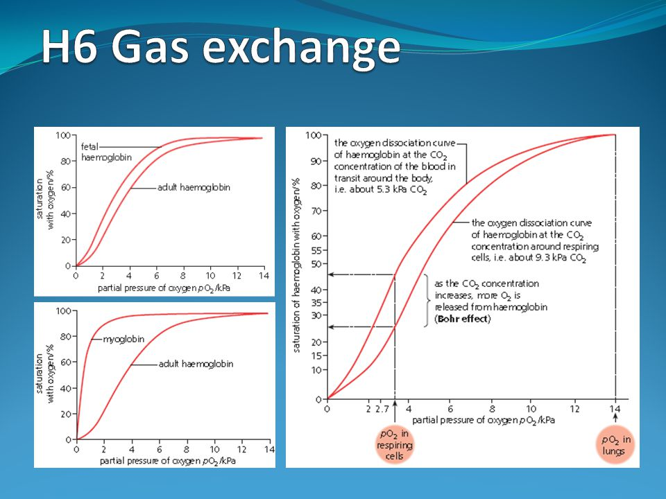 H6 Gas exchange
