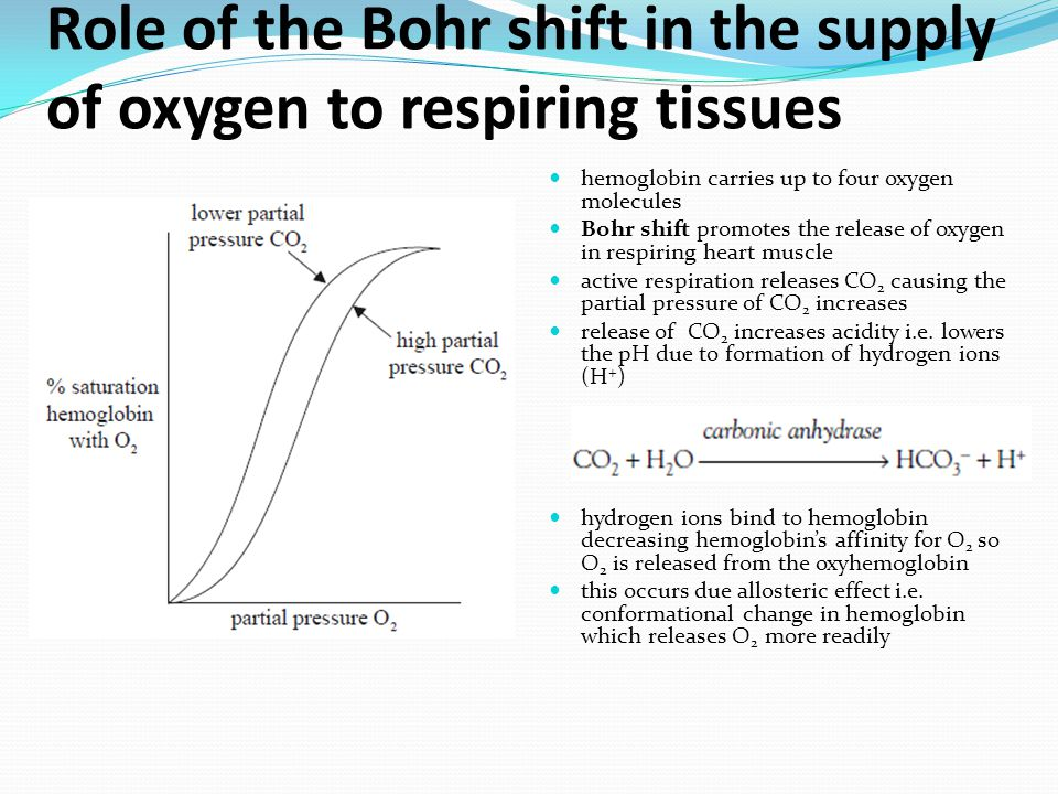 Role of the Bohr shift in the supply of oxygen to respiring tissues