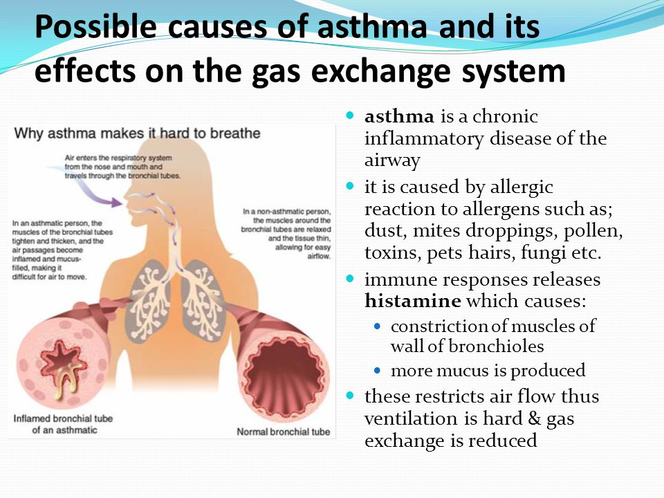 Possible causes of asthma and its effects on the gas exchange system