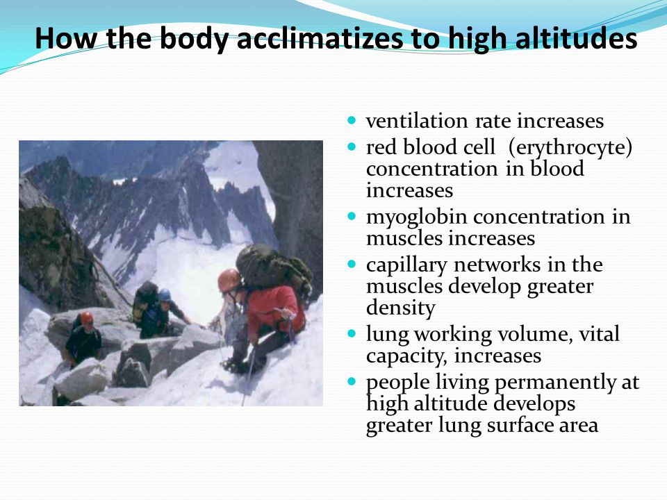 How the body acclimatizes to high altitudes