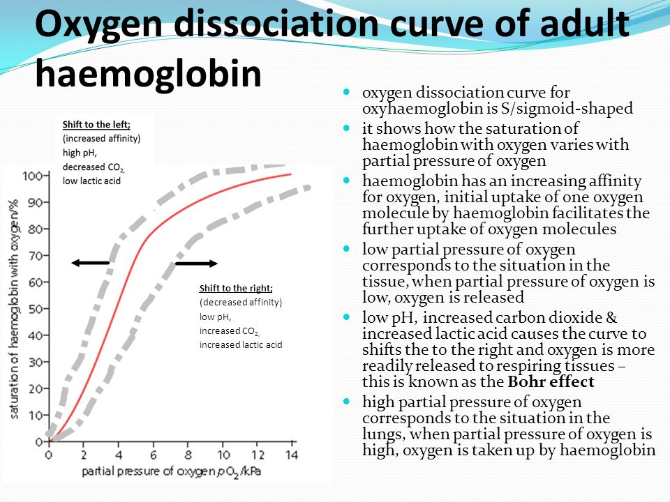 Oxygen dissociation curve of adult haemoglobin